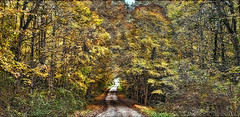 8R9A4549-50PRtazl1scTBbLGERk3 (ultravivid imaging) Tags: ultravividimaging ultra vivid imaging ultravivid colorful canon canon5dm3 leaves autumn autumncolors fall rural road twilight evening pennsylvania pa landscape
