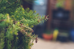 House Plant (Max_Downie) Tags: sony sonya7ii garden kew local car carshow plants nature sign home countryside country cars classic summer sun suffolk seasons ss sunshine spring field flower hobbies jolly bokeh leaves lens life autumn a7ii apples anglia environment england berries east flowers floral photography