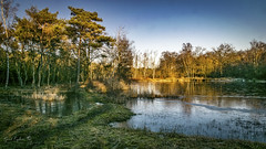 Buitengoor (Geert E) Tags: landscape landschap water pine mol buitengoor pond vijver swamp