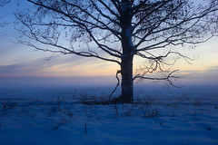 Snowy blues (Joni Mansikka) Tags: nature winter outdoor rural landscape field tree birch snowy blues paimio suomi finland