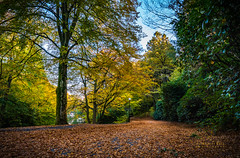 I miss you miss Autumn (m3dborg) Tags: landscape autumn tree leaves red nature beautiful outdoor ms miss magnus borg