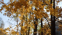 (cloversun19) Tags: rain animal field grass landscape branches leafs foliage sky russia russian spb tree walking country holiday holidays park garden dream dreams positive forest happy view grey legend fairytale fir firtree birch village evening romantic october september car road street blue maple leaves town city light sun yellow autumn trees wood