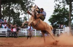 Pereira e Porcelana da Sem Querência (Eduardo Amorim) Tags: gaúcho gaúchos gaucho gauchos cavalos caballos horses chevaux cavalli pferde caballo horse cheval cavallo pferd pampa campanha fronteira quaraí riograndedosul brésil brasil sudamérica südamerika suramérica américadosul southamerica amériquedusud americameridionale américadelsur americadelsud cavalo 馬 حصان 马 лошадь ঘোড়া 말 סוס ม้า häst hest hevonen άλογο brazil eduardoamorim gineteada jineteada