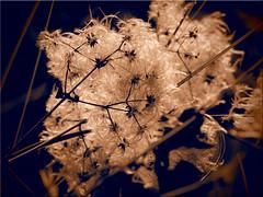 A work of art of nature (Ostseetroll) Tags: deu deutschland geo:lat=5407164889 geo:lon=1078466031 geotagged lübeckerbucht schleswigholstein sierksdorf workofart nature kunstwerk natur herbst autumn olympus em10markii