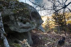 _DSC0638.jpg (fdc!) Tags: élémentsmatièresmatériaux mammifères chiens lesgrandsavaux nature mineral vertébrés 91champcueil paysages foretdefontainebleau rocher forêt rocherfiguratif fdc2018 concoursreponsesphoto 91essonne animaux france chien compagnie compagnon iledefrance instagrampaysagesubjectivelyobjectiveopendoorsgallerysome matière matières matériaux pierre pierres rochers site toutou toutous forest élément