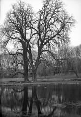 Im Schlossgarten Stuttgart (andreasmaurer89) Tags: plaubel peco profia 13x18 grossformat schneider symmar 180mm f56 tmax400 rodinal150