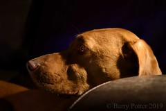 Beady eye (Barry Potter (EdenMedia)) Tags: barrypotter edenmedia nikon d7200 bracken