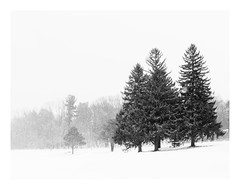 Winter's last breath (bprice0715) Tags: canon canoneos5dmarkiii canon5dmarkiii landscape landscapephotography nature naturephotography beautiful beauty beautyinnature blackandwhite bw blackwhite monochrome mono highkey highcontrast winter snow snowylandscape snowing trees