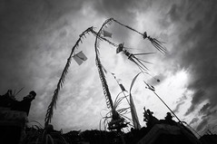 penjor (kuuan) Tags: manualfocus mf voigtländer15mm cvf4515mm 15mm bali indonesia sonynex5n festival temple sky bw penjor