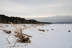 Wisconsin Point in Winter - Lake Superior Snowy Beach (Tony Webster) Tags: duluth greatlakes lakesuperior minnesota northshore superior wisconsin wisconsinpoint beach driftwood snow winter