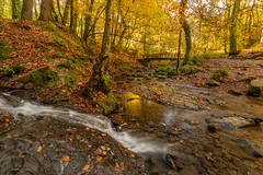 Autumn In Wepre Park (Rob Pitt) Tags: wepre brook park ewloe castle autumn bridge water polarising filter polarized valley wales north leaves cymru bridge‎ outdoor landscape stream creek waterfall sony a7rii canon 1740 river forest tree sky rock wood