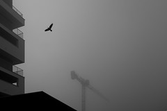 Bird (Kornelson) Tags: bird crane block poland czyzyny krakow cracow xt1 fuji fujifilm fujinon fogg foggy foggyday