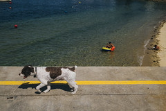 Bueu, Galicia (Guille Ibanez) Tags: dog perro galicia bueu beach playa colourful yellowline atlanticocean fujifilm fuji xt2 spain