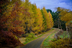 Country road (Valérie C) Tags: fall tree road nature country rural pine yellow green autumn colorful forest france auvergne nikon arbre sapin campagne route automne vert jaune red