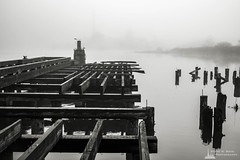 Old Wharf on the Willapa No. 8, Raymond, Washington, 2018 (Steve G. Bisig Photography) Tags: thatpnwlife visitpnw bestofthenorthwest blackandwhite blackandwhitephotography blackandwhitephoto bnw bnwaddicted bnwcaptures bnwcreatives bnwlife bnwmagazine bnwofourworld bnwplanet bnwphotography cascadia cascadiaexplored dock explorewashington fog foggy justgoshoot landscape landscapephotography livewashington nikon nikonnofilter nikonz7 northamerica northwest outdoorphotography outdoors pacificcounty pacificnorthwest pilings pnwbnw pnwdiscovered pnwexplored pnwisbeautiful pnwisbest pnwlife pnwwonderland raymond sonorthwest thenwadventure unitedstates upperleft upperleftusa usa wanderwashington washington washingtonstate washingtonexplored water wharf z7