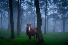 zaldia 1 (juan luis olaeta) Tags: fog foggy paisajes landscape natura zaldia horse caballo nieblas laiñoa atardecer sunset photoshop lihtroom canon canoneos60d sigma1020