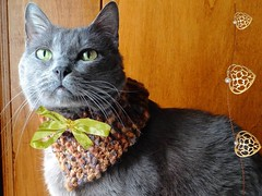 Chat chic! (antonè) Tags: gatto chat chic mussy cat sassari christmas