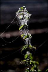 Le Lude (Sarthe) (gondardphilippe) Tags: lelude sarthe maine paysdelaloire nature campagne lumière light couleurs colors champ extérieur field graphique green haie herbes monochrome macro outdoor ombre plante quiet rural texture vert zen
