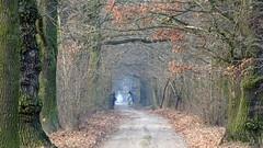 Riders ... (Arkadious) Tags: horse tree trees oak autumn tunnel nature road rural