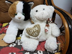 Chloe gets a friend (SierraSunrise) Tags: animals bear cat esarn isaan nongkhai phonphisai stuffed stuffedanimal thailand