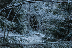 An opening in the forest (kaifr) Tags: trees blue winter forest frost nature shadow dark woods opening cold oslo norway no
