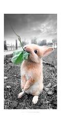 Rosa coniglio... Cucciolo di coniglio rosa con malva (Fiorenzo Delegà) Tags: malva rosa coniglio rabbit