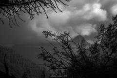 Vallée des Brumes (Frédéric Fossard) Tags: monochrome noiretbanc blackandwhite paysage landscape mountainscape montagne mountain vallée valley nuage cloud brume alpes hautesavoie valléedechamonix argentière branches massifdumontblanc nature arbre tree flancdemontagne