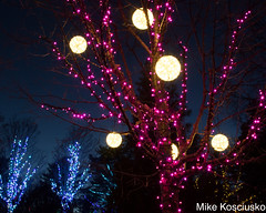 915A6269 (mikekos333) Tags: 2018 december christmas christmaslights coastalmainebotanicalgardens boothbay