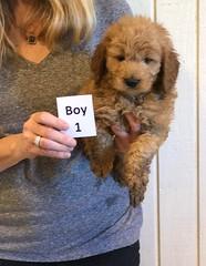 Darby Boy 1 pic 3 12-16