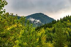 Benim Kutlu Dağlarım (My Divine Mountains) (SBastan) Tags: dağ dağmanzarası mountain mountainlandscape green yeşil orman forest mysticforest fabulousforest fabulous mistikorman nikond610 tamronsp2470mmf28divcusd serhatbaştan