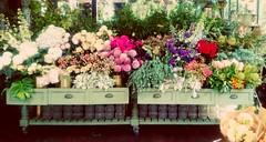 Drawer Full (cheshycat) Tags: flower flowers botanical pretty shabbychic