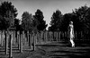 Shot at dawn (jdpreece) Tags: nationalmemorialarboretum remberance shotatdawn