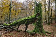 _FLX3885p (Félix Pérez Antón) Tags: pentax k3ii urbasa navarra naturaleza bosque