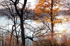 Kirkkojärvi (Olli Tasso) Tags: syksy autumn kirkkojärvi lake järvi ruska lempäälä suomi aimala nurmi maisema nature luonto landscape