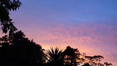 Morning in Massey (Sandy Austin) Tags: panasoniclumixdmcfz70 sandyaustin massey westauckland auckland morning sky trees