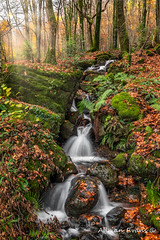 Autumn Forest Stream (Adrian Evans Photography) Tags: autumn snowdonia waterfall water leaf sunbeam fall riverside wales uk northwales crafnantriver lightbeam autumnleaves stone landscape autumnwaterfall outdoor rocks sky longexposure trefriw autumnal rapids brook river adrianevans crafnant autumnalforest stream leaves trees forest british lightray d850 nikon 20mm