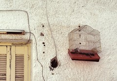 Captivity : Escape Attempt (Storyteller.....) Tags: captivity escape cage attempt wall beak free