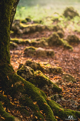Autunno a Prato di Campoli / Autumn in Prato di Campoli (Abulafia82) Tags: pentax pentaxk5 k5 ricoh ricohimaging ciociaria lazio italia italy veroli pratodicampoli foliage autunno fall 2018 abulafia colore colors color colori acolori natura nature montagna montagne monti mounts mountains helios helios4085mmf15 helios408515 helios8515 helios40 85mm 8515