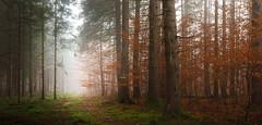 IMG_4441 (Calabrones) Tags: mignonbergeroswald deutschland oberbayern bayern münchen truderingerwald wald bäume nadelbäume nebel morgennebel