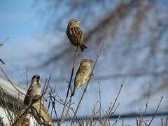 IMG_4581 (kennethkonica) Tags: nature birds animalplanet animal animaleyes autumn canonpowershot canon usa america midwest indianapolis indiana indy color outdoor wildlife