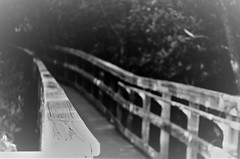 After a day of fishing and 8 beers... (Twila1313) Tags: pier planks mangroves fishing beer drunk inebriated smashed drinking alcohol dizzy monochrome blackandwhite blackwhite