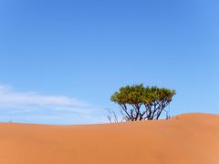 P1107746-LR (carlo) Tags: namibia panasonic dmcg9 g9 africa desert deserto landscape africanlandscape sossusvlei