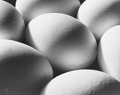 eggs/huevos/eieren (jankarelkok) Tags: artistieknaaktfotograaf beeldmaker fotograaf fotografie fotostudio harderwijk jankarelkok landschapsfotograaf nederland portretfotograaf studio studiofotografie wwwjankarelkoknl tiltfrontpanel eggs huevos eieren plaubel 4x5inch hp5