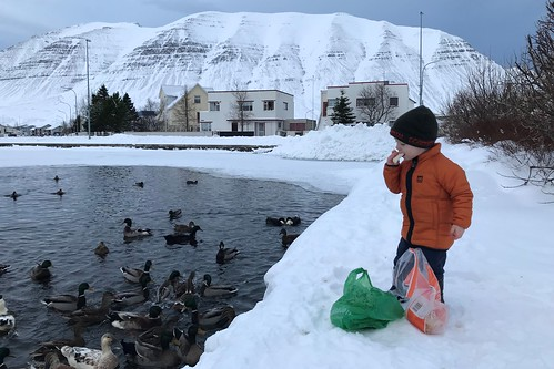 "Garðar Áki gefur brabra • <a style=""font-size:0.8em;"" href=""http://www.flickr.com/photos/22350928@N02/46110994134/"" target=""_blank"">View on Flickr</a>"