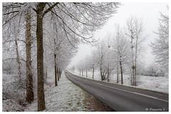 Route dégagée (Pascale_seg) Tags: paysage landscape hiver winter givre frost brina neve neige snow white blanc bianco moselle lorraine grandest france nikon route road strada arbre tree