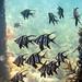 Flinders Pier Underwater-20
