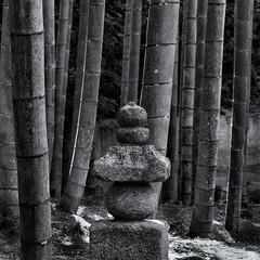 Bamboo grove (Tim Ravenscroft) Tags: bamboo lantern enkoji kyoto japan garden hasselblad hasselbladx1d monochrome blackandwhite blackwhite