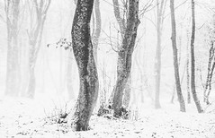 Winter moments (Pan.Ioan) Tags: winter trees trunk forest snow woods nature snowing white cold outdoors beauty beautiful