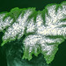 Attu, the westernmost Aleutian island, is nearly 1760 km from the Alaskan mainland. Original from NASA. Digitally enhanced by rawpixel.