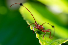 Guitarrero (Diego Kondratzky) Tags: guitarrero insectos insecto insect macro naturaleza nature